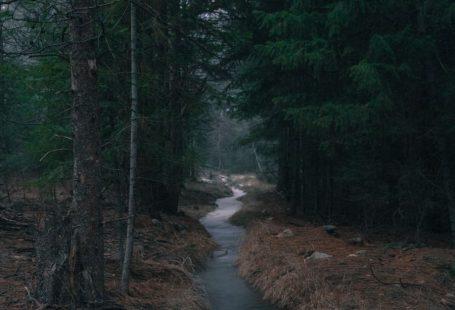 "Kirie Pedersen's ""A Walk in the Park"" in Manifest-Station."